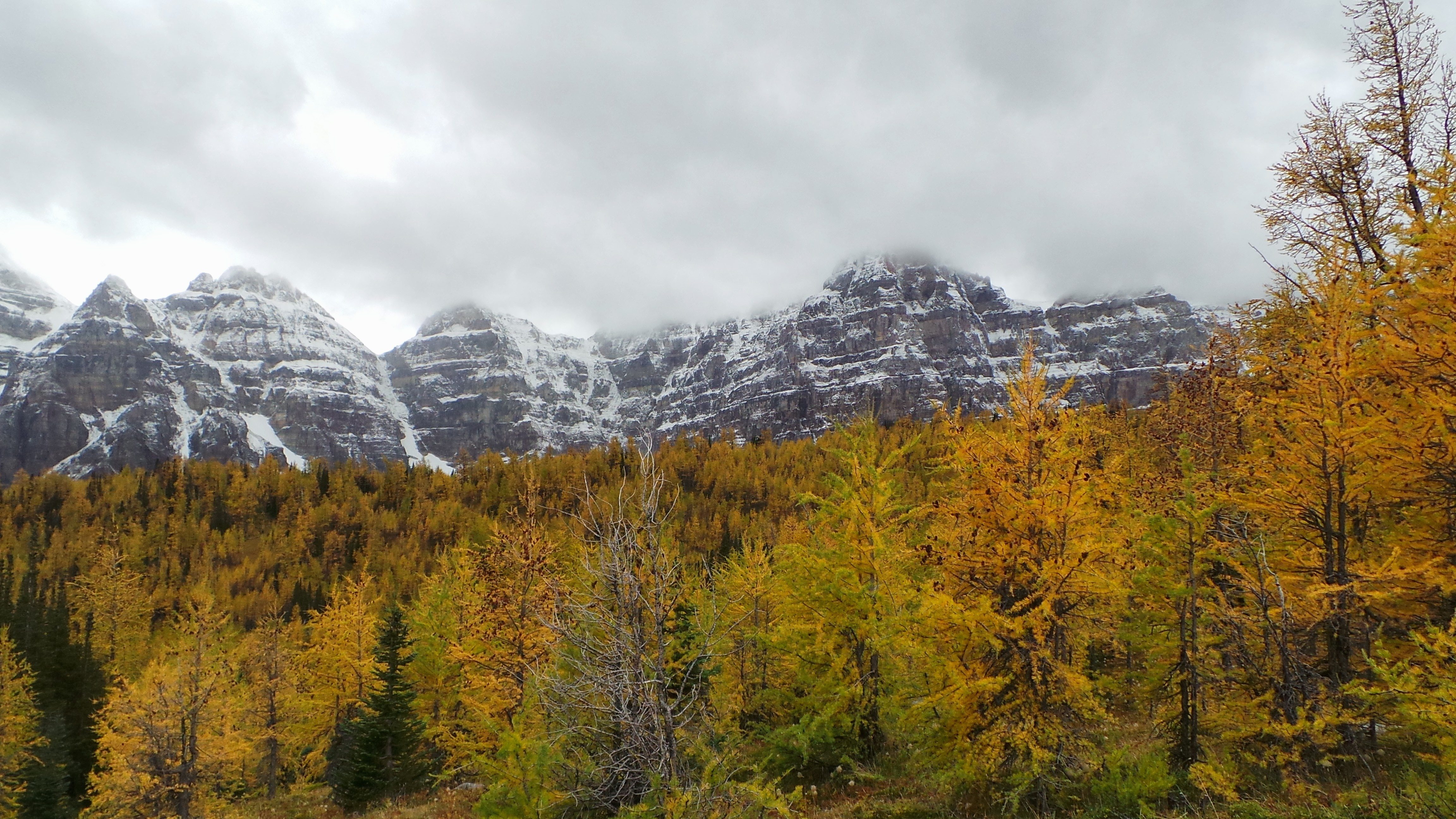 A colourful guide to Alberta's amazing larches!