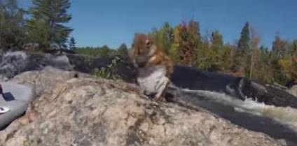 Real life Danger Bay: Ottawa surfer saves squirrel!