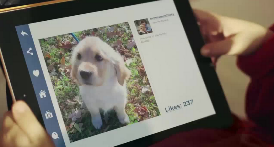 Toronto Humane Society introduces Puppy Swap program!