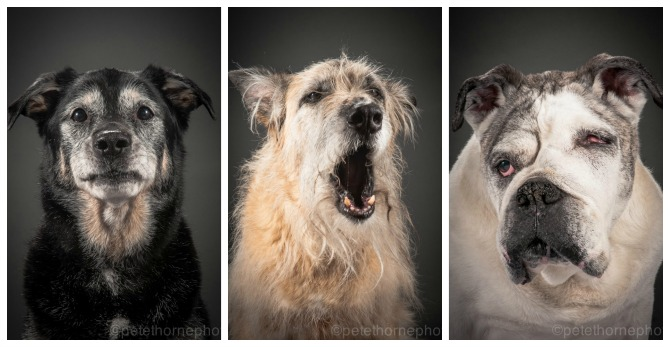 Vancouver photographer perfectly captures the final years of strangers' beautiful dogs.
