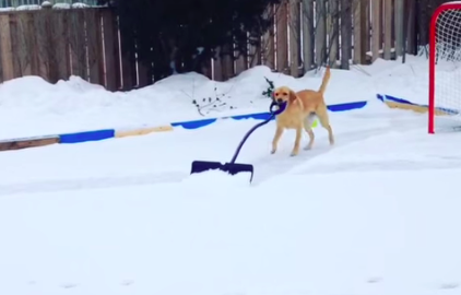 Ontario dog has had just about enough of winter.