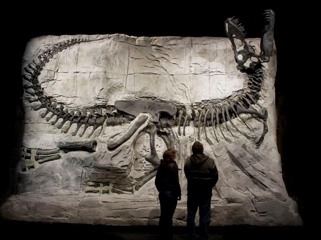 royal-tyrrell-museum-of-palaeontology-L-8