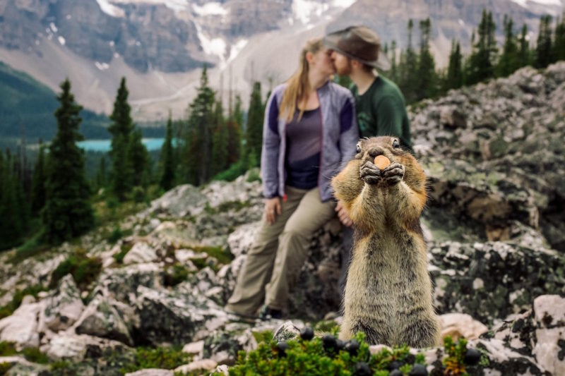 The Banff Squirrel is BACK!