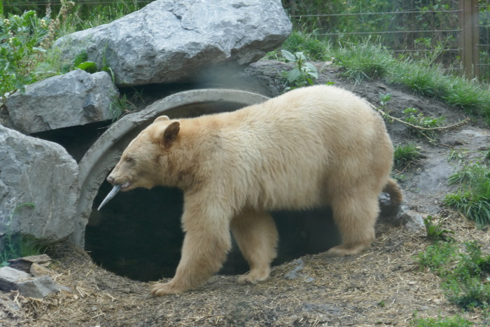 Calgary Zoo offering photographers rare opportunity!